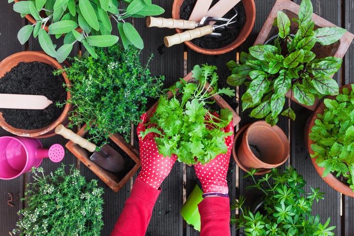 A kert, mint terápia – Élvezd ki minden pozitív hatását!