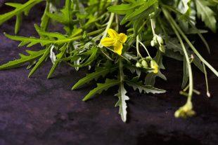 Salátának valók, melyeket balkonodon is könnyen termeszthetsz