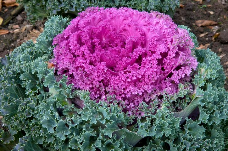 Őszi virágok erkélyre – Legyen színes és illatos balkonod a nyár után is!