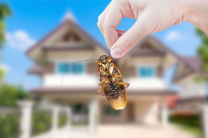 Mi vonzza ősszel a bogarakat a lakásba? Ezekre ügyelj!
