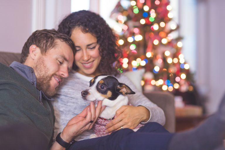 Kis kedvencek és a karácsony – Így maradjon mindenki biztonságban