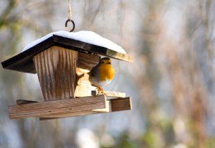 hogyan készíts madáretetőt kertedbe