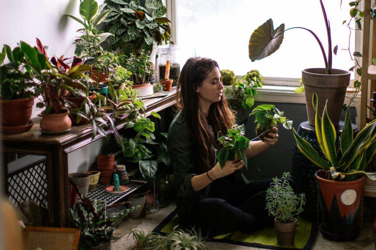A legzöldebb szobanövények titkai – Így fognak kicsattanni az egészségtől