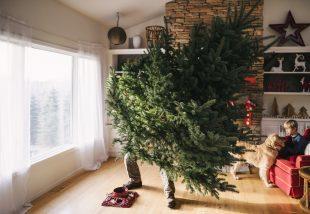 Így tartsd életben a karácsonyfát