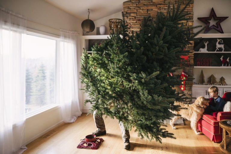 Így tartsd életben a karácsonyfát – Legyen sokáig szép az örökzöld