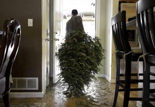fenyőfa karácsony után