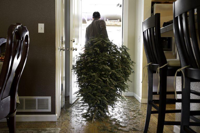 5 mesteri tipp, hogyan hasznosítható a fenyőfa karácsony után
