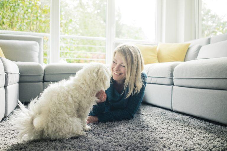 Kutya a lakásban – Hogyan készítsd fel otthonodat az új lakóra?
