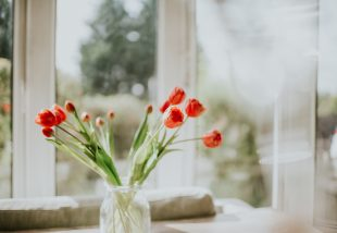tulipán-kisokos