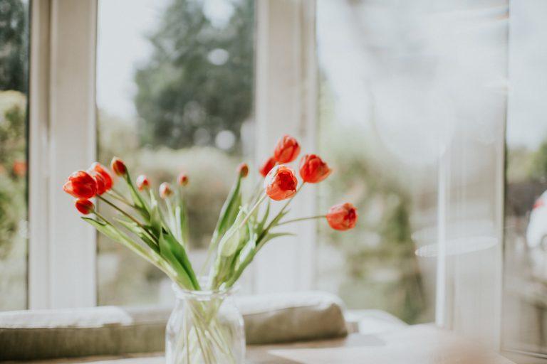Tulipán-kisokos – Így maradhat sokáig szép a vázában a tavasz legszebb virága