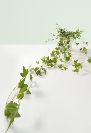 futónövények