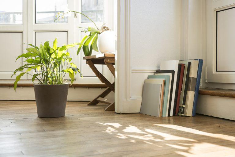 Növény-energetika a feng shui szerint