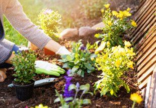 szódabikarbóna a kertbenszódabikarbóna a kertben