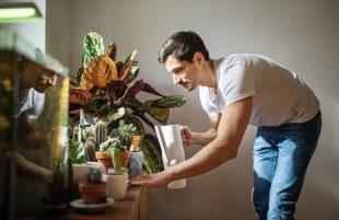 hogyan tartsd életben növényeidet