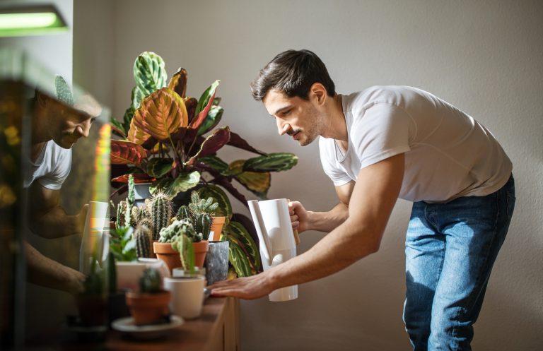 8 tipp, hogyan tartsd életben a növényeidet nyáron