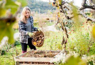 őszi kertrendezés