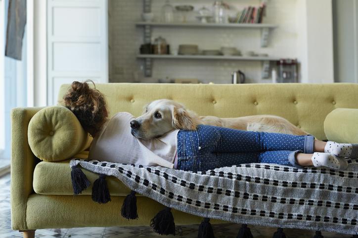 Kutya a lakásban – Ezekre ügyelj kedvenced kényelméért és bútoraid védelméért
