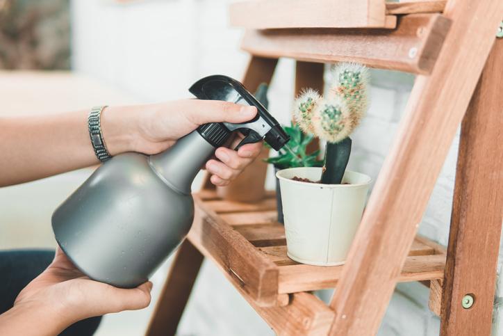 4 hiba, amit NE kövess el, ha életben akarod tartani szobanövényeidet