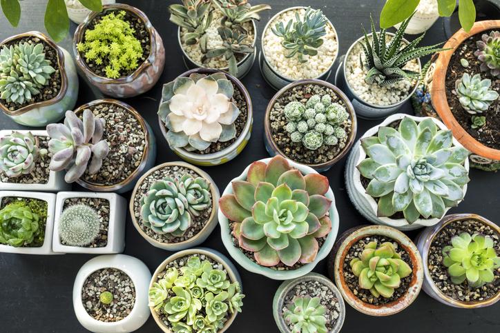 Ezeket SOHA! 6 káros dolog, amire nem is gondolnál a növényeid kapcsán