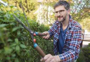 3 növény, amelyekből tökéletes kerítést álmodhatsz magadnak