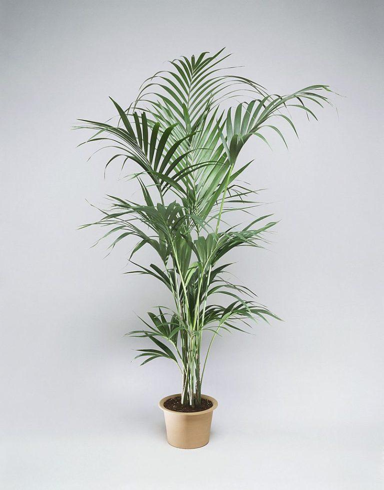 Növényimádóknak kötelező! Íme, 11 szépség a lakásodba