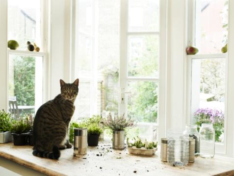 Hasznos tippek cicásoknak –  Ezekre figyelj, ha lakásban tartod a macskád