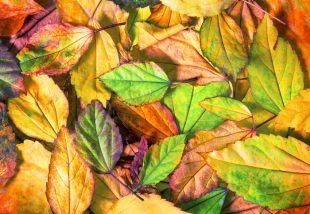 10 gyönyörű dekorációs ötlet őszi falevelekhez