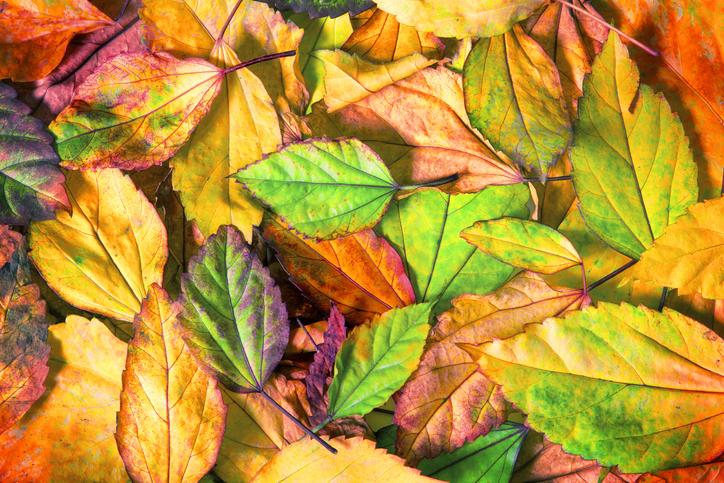 DIY őszi dekorációk – Olcsó és szuper ötletek kintre és bentre is