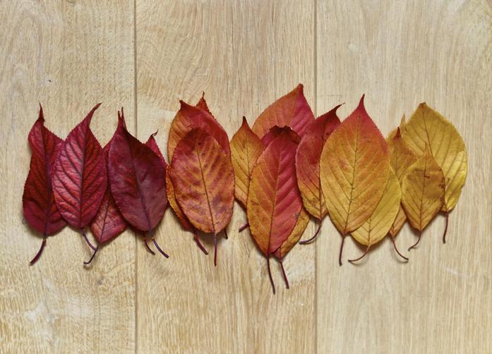 A legszebb DIY tippek őszi falevelekből – Próbáld ki te is!