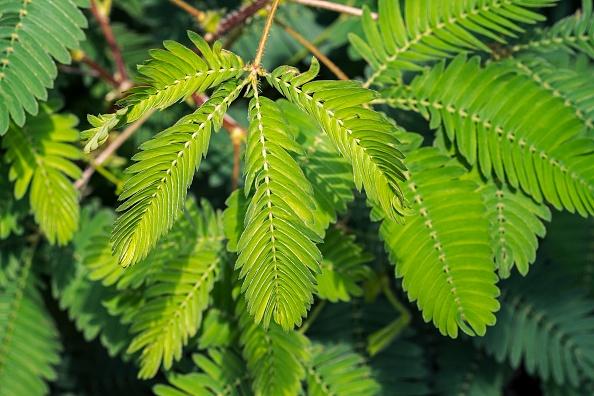 Zöld horoszkóp – Ez a növény illik hozzád a csillagjegyed szerint