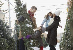 Vágott karácsonyfa tudnivalók