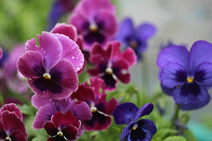 Ezek a legtartósabb téli erkély növények – Így mindig szép lesz a teraszod