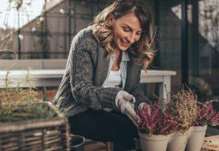 téli erkély növények