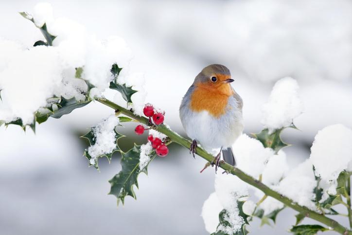 Így lesz télen is csodálatos a kerted – Ez a 9 növény a leghangulatosabb