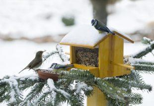 Madáretetés télen – Ezekre mindenképpen figyelj oda!