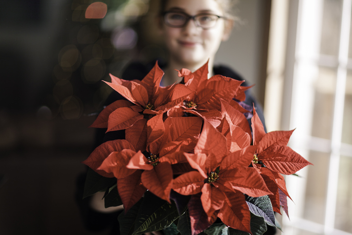 9 hagyományos karácsonyi növény, ami nélkül nem ünnep az ünnep