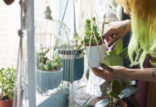 Téli növényápolási kisokos – Ezekre figyelj oda az ápolásuk során