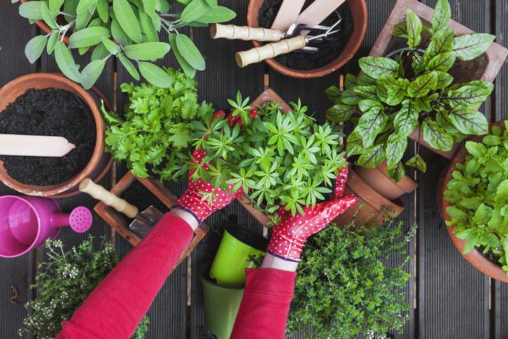 A legfontosabb kerti munkák tavasszal – Ezekről semmiféleképp NE feledkezz meg!