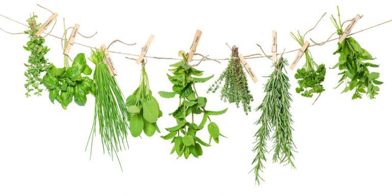 Ez a 7 fűszernövény nem hiányozhat a konyhádból