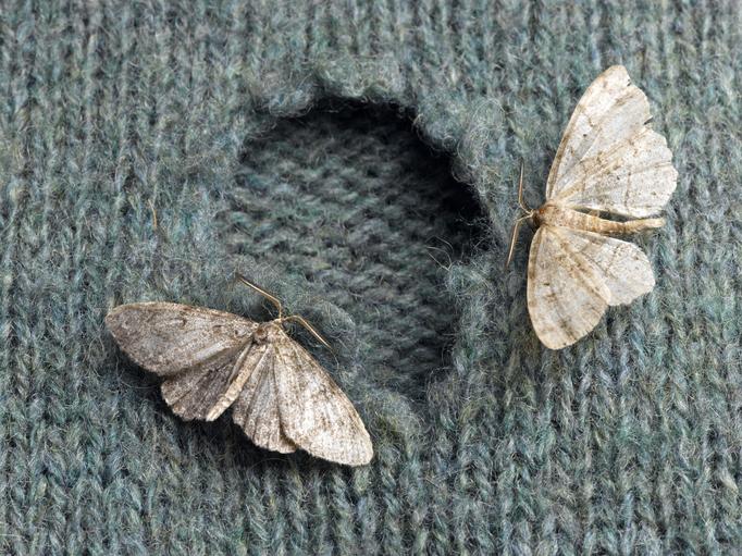 Rejtélyes lyukak vannak a ruháidon? A következő 7 rovar egyike lehet az oka