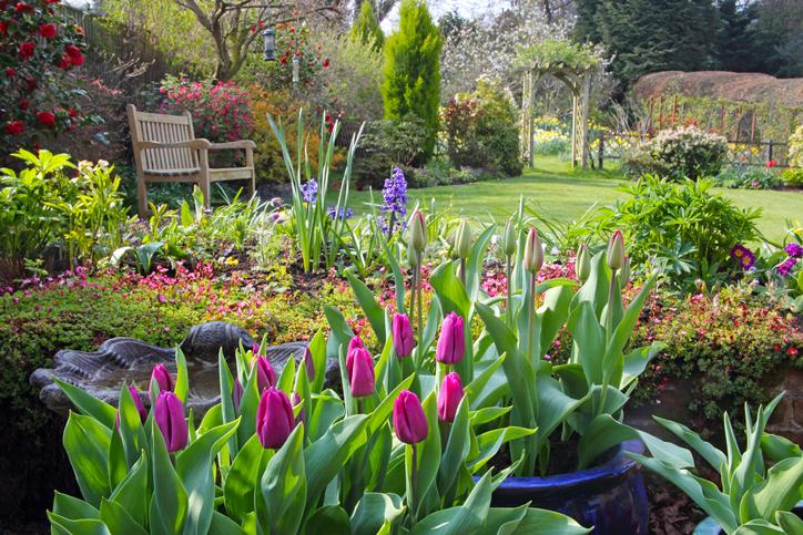 Ültetésre fel! – 7 gyönyörű évelő virág kora tavaszra
