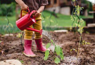 kertépítési ötletek házilag