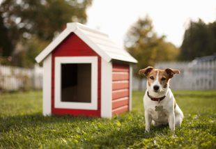 Egy kutya árulja gazdái eladó házát! Cuki videó!