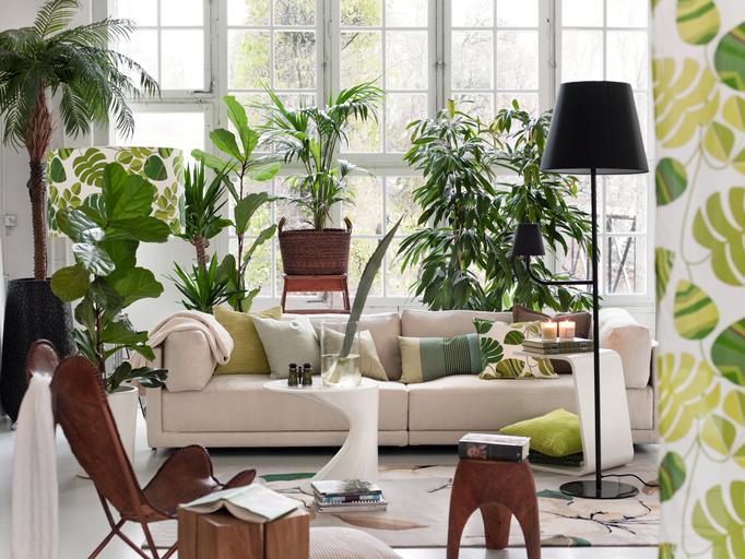 Zöld kiállítás! Így rendezd el szobanövényeidet, hogy azok valódi dekorelemek legyenek a szobában