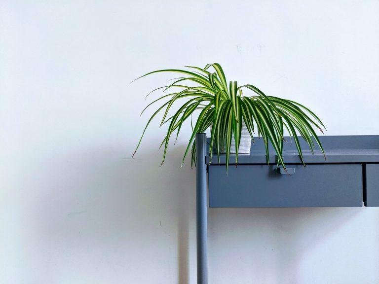 Nehezen tartod életben szobanövényeid? Az alábbi 5 fajtával garantáltan sikered lesz