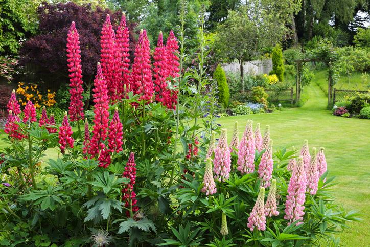 Unalmas a kerted? Válaszd ezeket a mutatós növényeket, hogy trendi legyen az udvar!