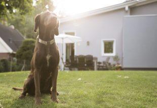 Kutya vagy szép kert? Nem kell döntened! Így mindkettő lehetséges