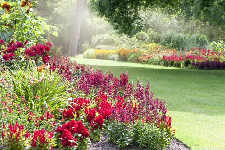 A mi zöld márciusunk 3. – Így varázsolj magadnak színesebb és szebb kertet