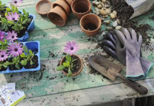 Nyári munkák a kertben