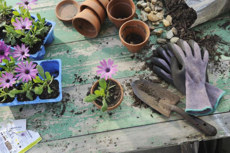 Nyári munkák a kertben – Hogyan tartsd jó állapotban az udvarod?